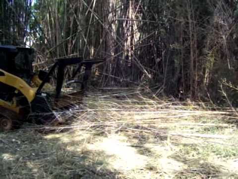 Clearing a bamboo forest