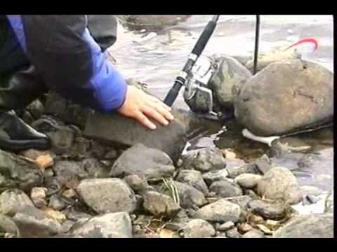 прикорм для зимней рыбалки на плотву