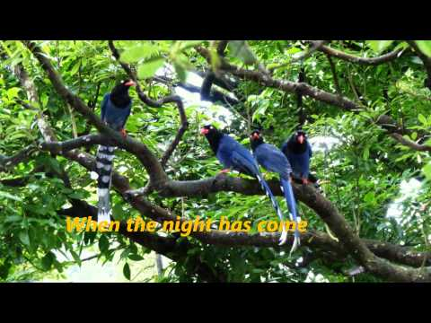 Baixar Seal -  Stand by Me ,Blue Magpie,台灣藍鵲- 720P HD