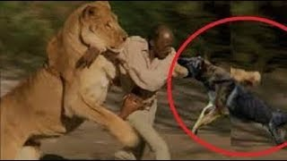 Brave Owner Risks His Own Life To Save His Dog!!!