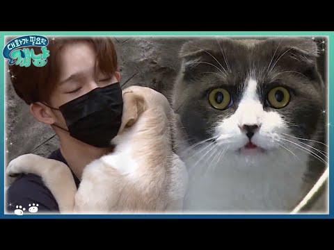 Dear My Human 남태현과 개냥이들의 러브하우스 최초공개! 171129 EP.11