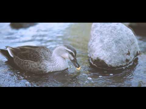 Castaway - River (Official Video)
