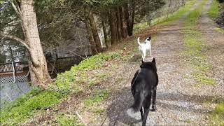 Dog Day - 2019-04-17
