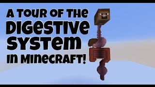 The Digestive System in Minecraft (Tour)