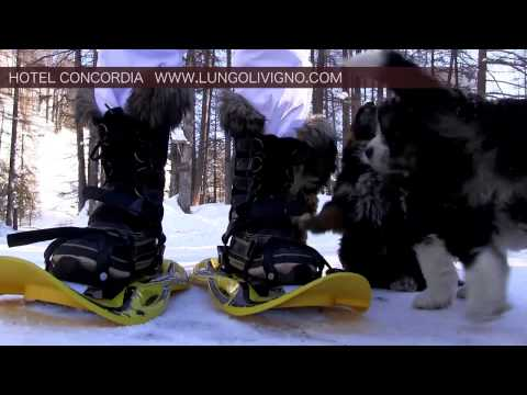 Livigno - winter activities - Hotel Concordia****