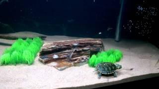 Feeding Turtles Live Food