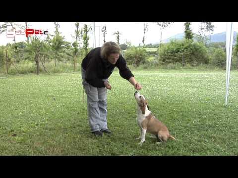 Il cane fa l'orso