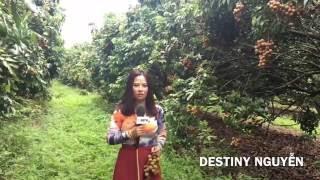 PHÓNG SỰ CỘNG ĐỒNG: Ghé thăm vườn trái cây của người Việt tại tiểu bang Florida