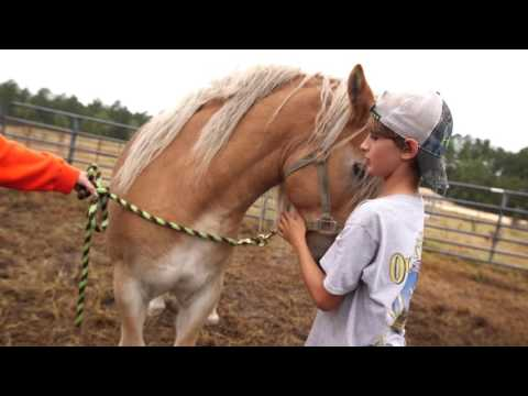 Hurricane Matthew: Small Town Farm Taking Horse and Cattle Evacuations
