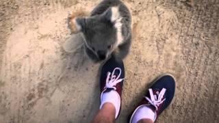 抱きついてくるコアラ