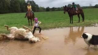 Chú ngựa chơi bẩn nhất năm