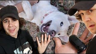 MY DOG DESTROYED DAVID'S TESLA!! (key)