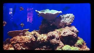 Stunning aquarium..