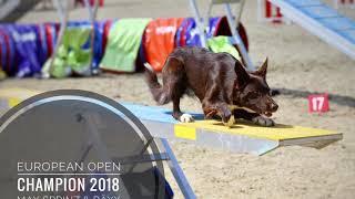 European Open Agility Champion 2018 • Max Sprinz & Bäxx