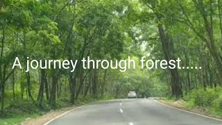 A Journey Through Forest...