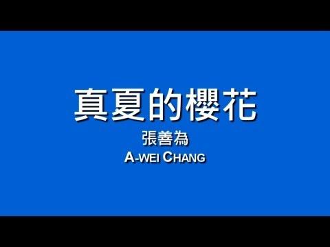 張善為 A-Wei Chang / 真夏的櫻花【歌詞】