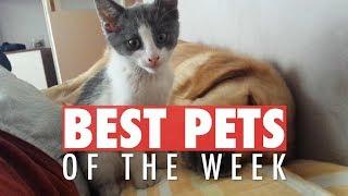 Best Pets of the Week Video Compilation  April 2018 Week 2