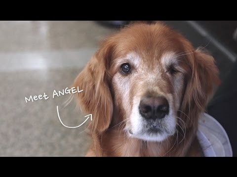 Houston's official therapy dog, Angel, is a frequent visitor to Memorial Hermann Southwest Hospital