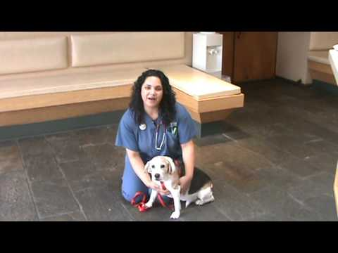 Atlantic Coast Veterinary Specialists - Pacemaker Placement