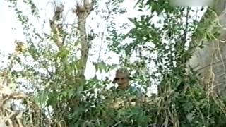 Những đứa con của núi (phim Việt Nam - 2005)
