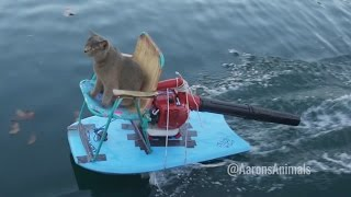 Homemade Jet Ski - Aarons Animals