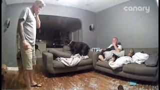 Dog Slams Through Glass Table