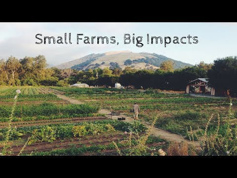 The FruitGuys Community Fund was founded in 2012 to provide small grants (up to $5,000) to small farms and agricultural nonprofits for sustainability projects that have a large positive impact on the environment, local food systems, and farm diversity.
