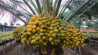 5 trái cây độc, lạ, tuyệt ngon, giúp làm giàu tại đồng bằng sông Mekong, Việt Nam