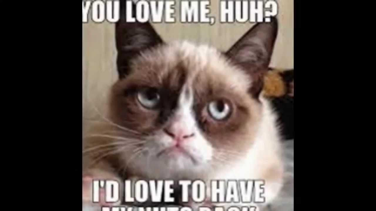 Funny Cat Memes: Cute Funny Cat Memes #1