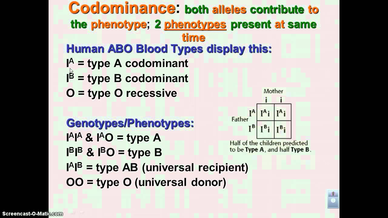 for incomplete dominance displaying 18 images for incomplete dominanceIncomplete Dominance Vs Codominance