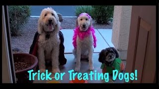 A Doggy Halloween - Dogs Go Treat or Treating