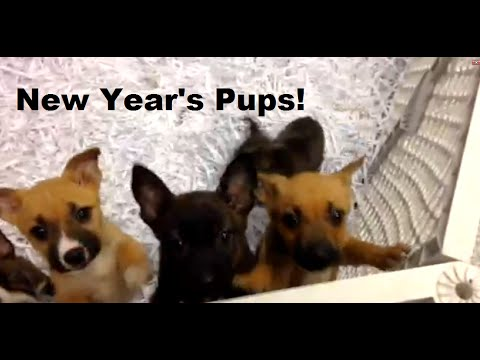 New Year's pups