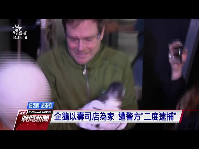 企鵝以壽司店為家 遭紐國警方「二度逮捕」