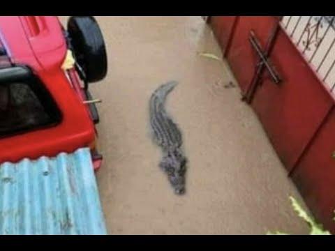 郑州水灾海洋馆鳄鱼出走,撕咬尸体,32座水库水位告急,中共偷偷泄洪重蹈70年代悲剧!