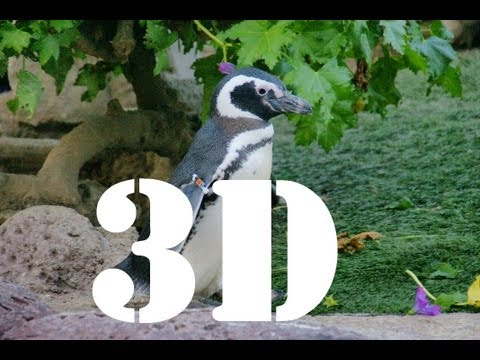 Penguin Encounter (3D) SeaWorld San Diego