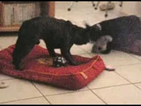 Behemoth contre les bebes