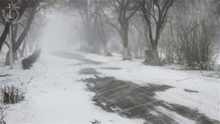 🎧 Winter Storm Sound - Heavy Blizzard Snowstorm  Ambience & Howling Wind Sounds For Relaxation