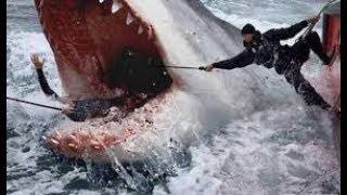 หนังใหม่ 2019 the Shark ฉลามยักษ์อสูรใต้ทะเล HD หนังใหม่ 2019 พากษ์ไทยเต็มเรื่อง (กดติดตามด้วยนะคะ)