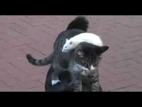 cane, gatto e topo... tre amici inseparabili