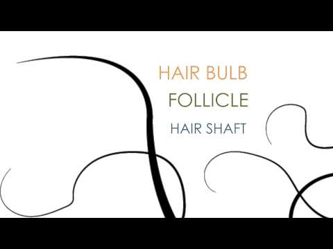 Introduction to Hair Structure: Hair Science 101
