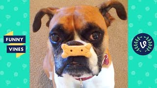 TRY NOT TO LAUGH - TOO CUTE! Funny Pets & Animals