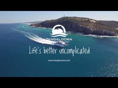 video Tangalooma Classic Whale Watching Day Cruise