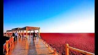 লাল সৈকত  Red Sea Beach in China   FK News