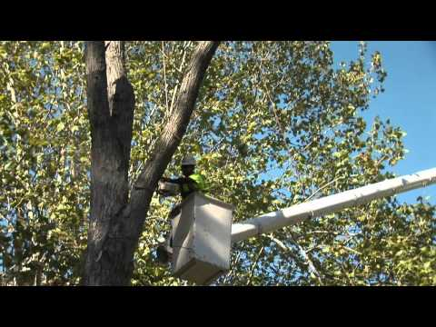 Arbor Masters - Experts in Tree and Plant Care for Over 50 Years