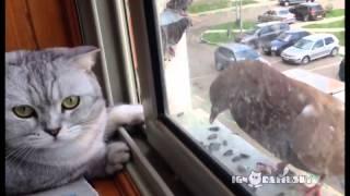 窓の向こうに鳩
