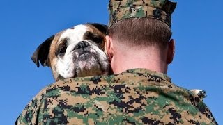 Dogs Welcoming Soldiers Home Compilation Part 2