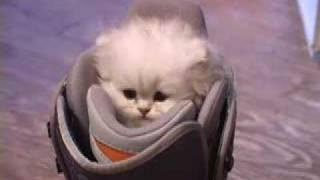 スキーブーツと猫