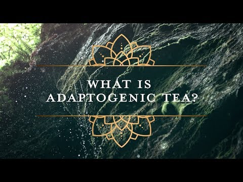 What is Adaptogenic Mushroom Tea?