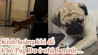 Thử gắn Camera theo dõi Chó Pug Bư làm gì khi ở nhà một mình 🐶 Chủ xem lại kinh hoàng 😂 Pugk Vlog