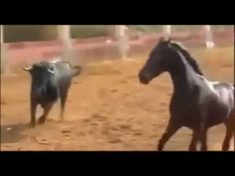 Neverovatna borba